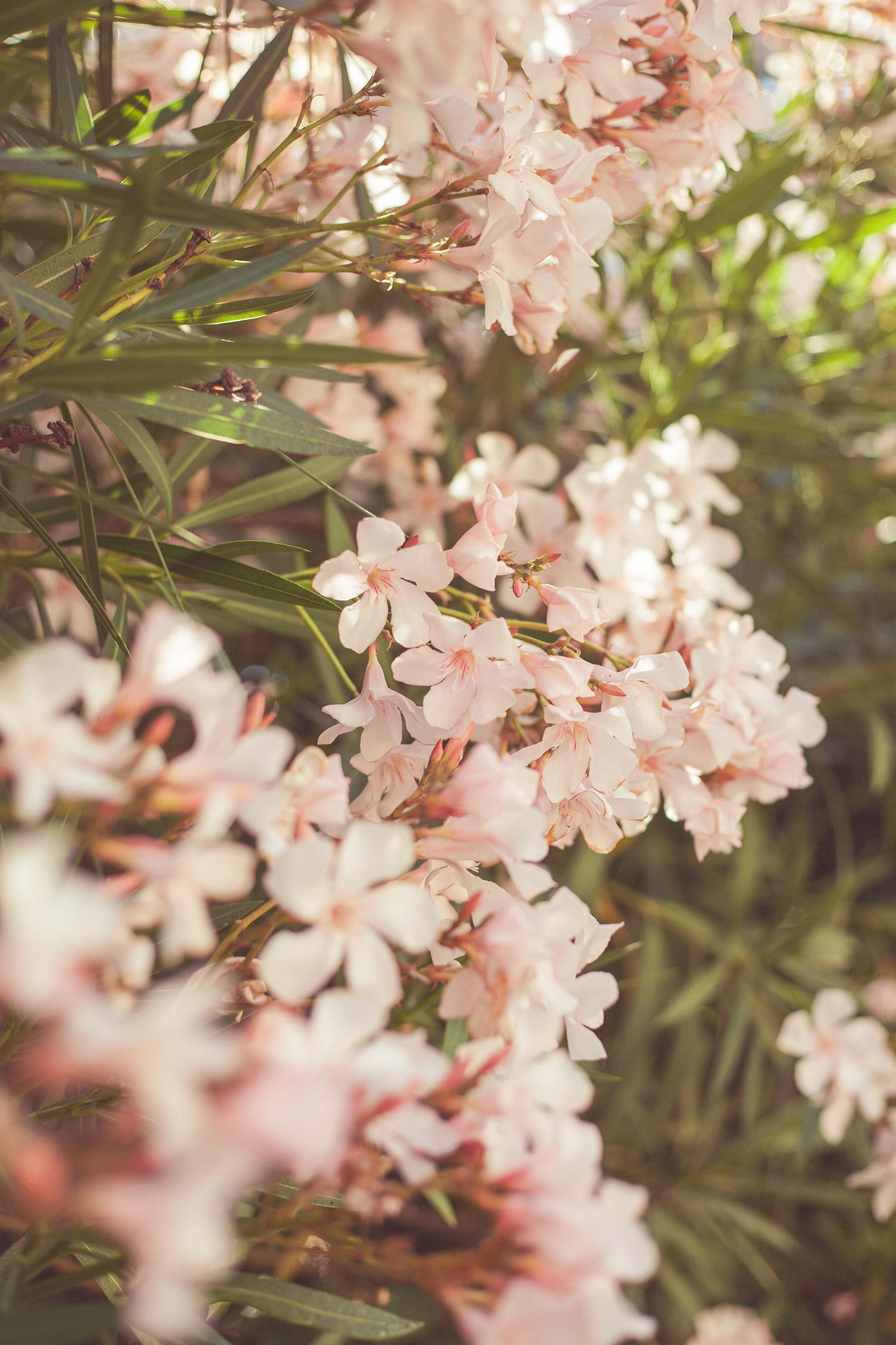 Sunny Capri | Chic Lightroom Presets